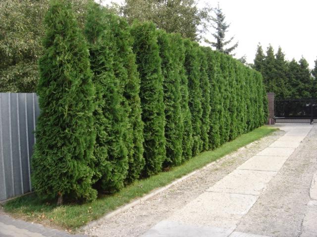 Ograde za dvorište – drugi dio  Uredite Dom