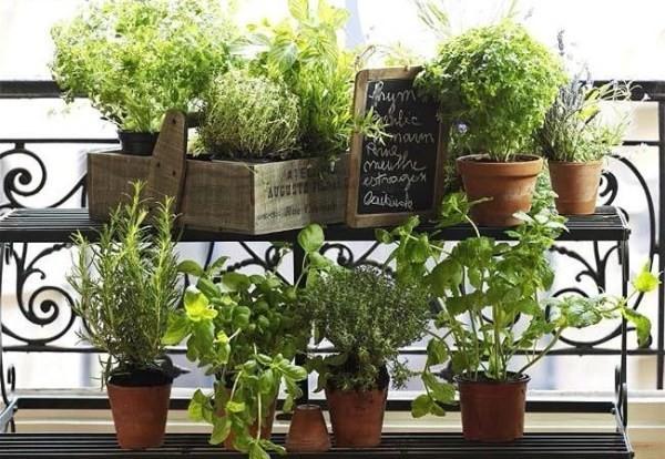 Začinsko bilje na balkonu – Drugi dio  Uredite Dom