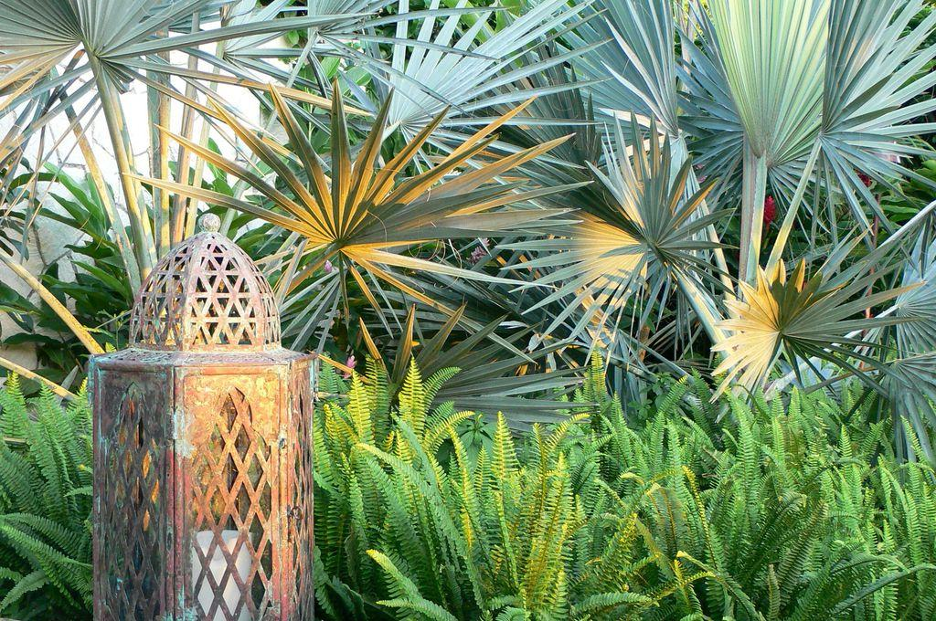 Uredite vrt u tropskom stilu  Uredite Dom