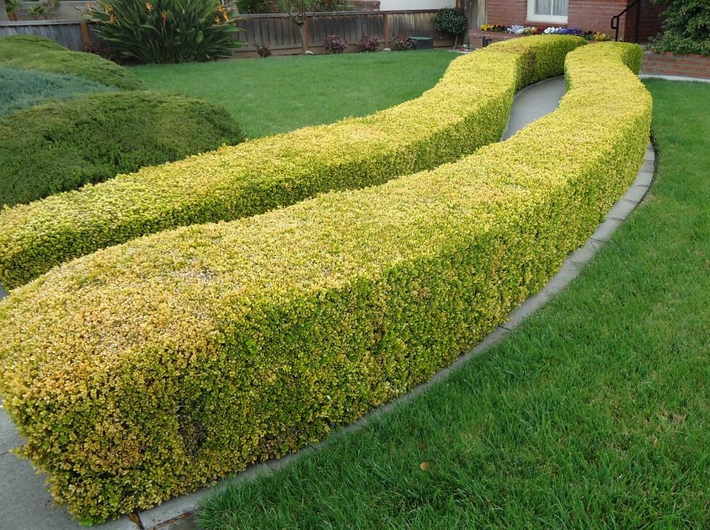 Vrtlarstvo za početnike – živa ograda  Uredite Dom
