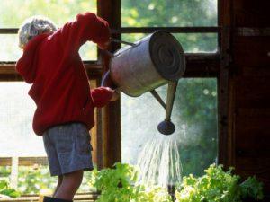 Savjeti za uspješan uzgoj biljaka u plasteniku  Uredite Dom