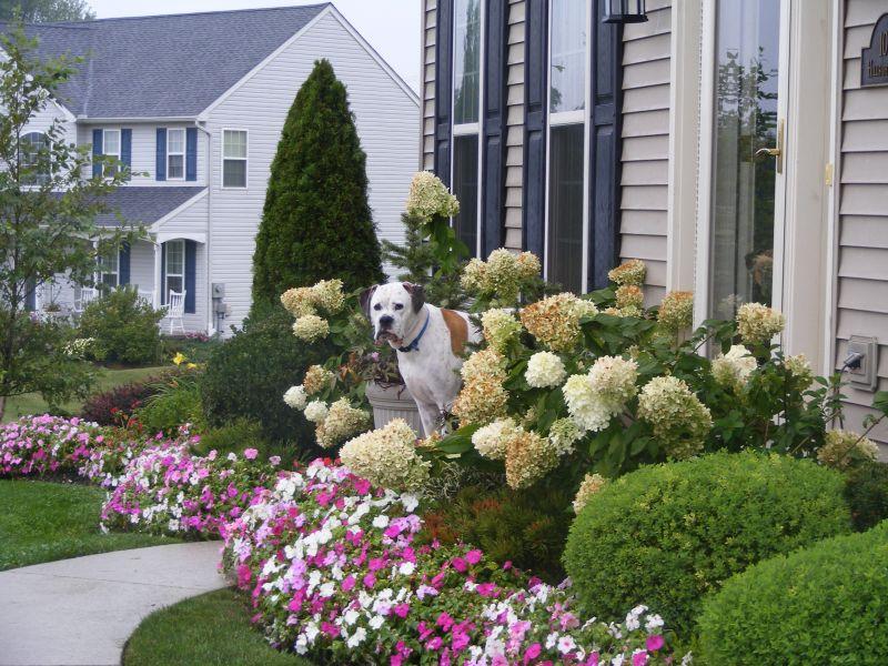 Ideje za uređenje malog vrta  Uredite Dom