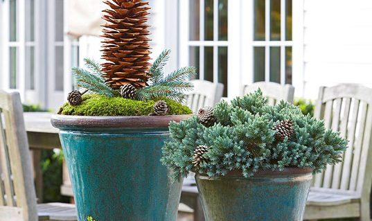 5 ideja kako upotrijebiti prazne saksije zimi  Uredite Dom
