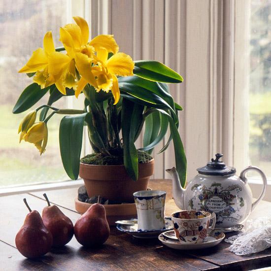Uzgajajte orhideje u svome domu  Uredite Dom