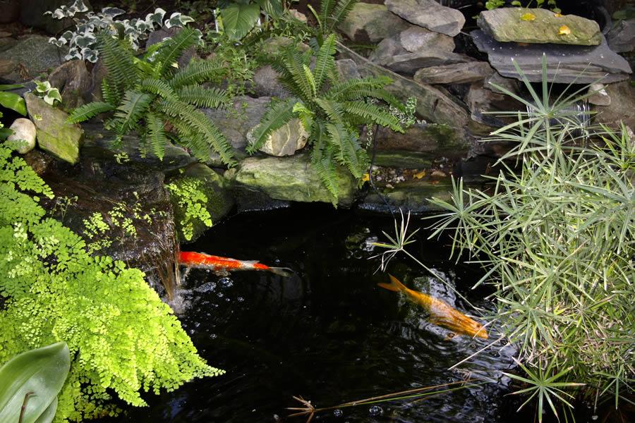 Jezero u vrtu ili ribnjak, gdje i u kojem stilu  Uredite Dom