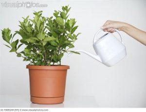 Sobne biljke koje mirišu  Uredite Dom
