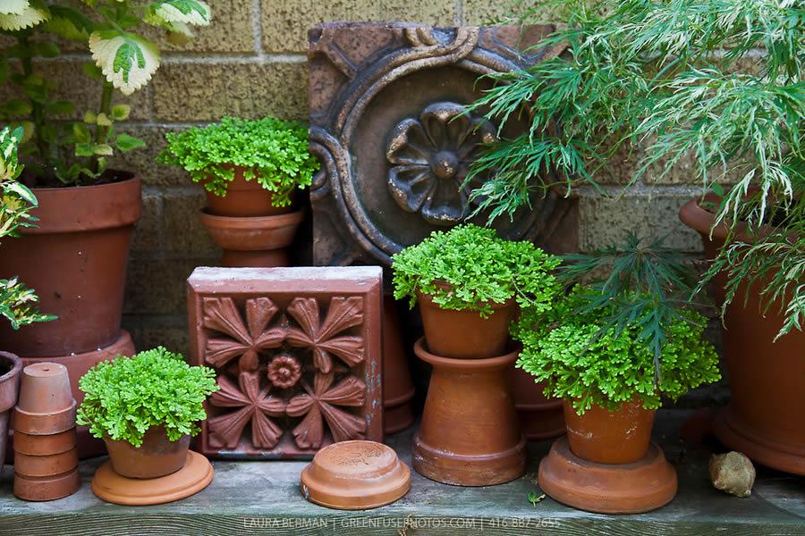 Jesenje Dekoracije  Uredite Dom
