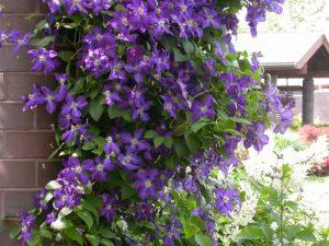 Loze koje će ukrasiti vaš vrt  Uredite Dom