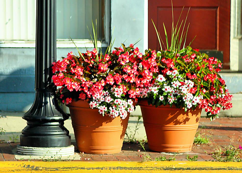 Osnove uzgoja cvijeća u saksijama  Uredite Dom