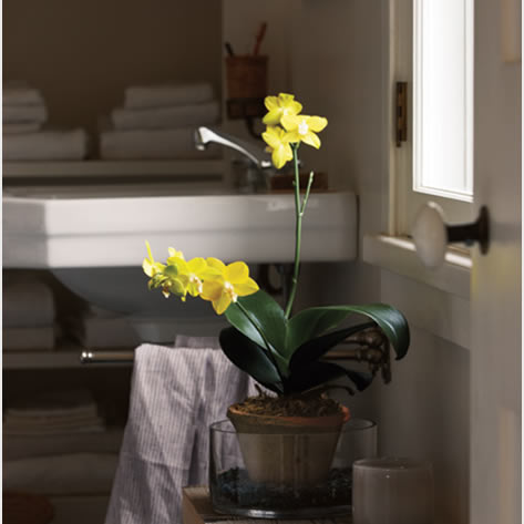 biljka kupaonica