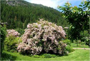 cvetajuce grmlje