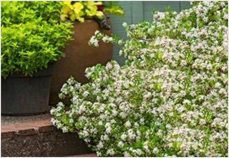 Cvjetajuće grmlje koje će vas obradovati u proljeće  Uredite Dom