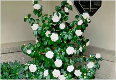 cvetajuce grmlje7
