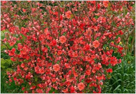 cvetajuce grmlje9