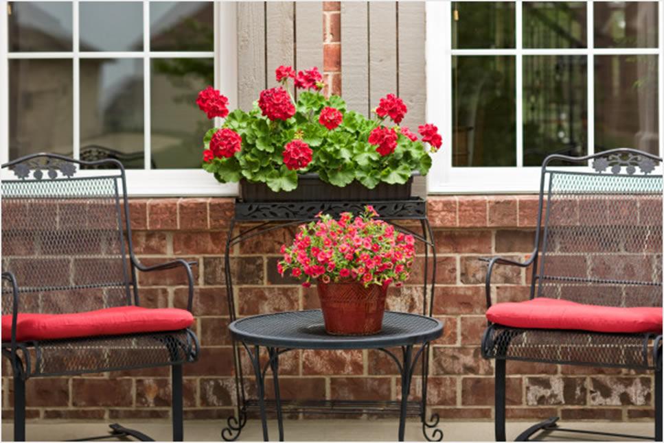10 ljetnjih savjeta za zdravlje cvjetnica  Uredite Dom