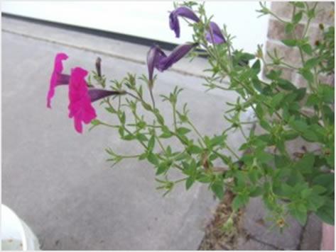 cvjetnice2