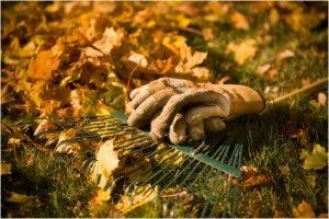 jesen u vrtu