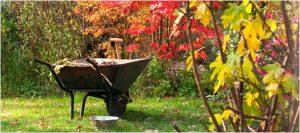 jesenje ciscenje vrta