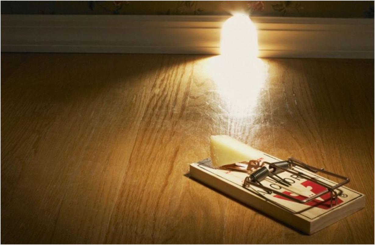 Kako uloviti miša u stanu? Lako sa našim savjetima  Uredite Dom