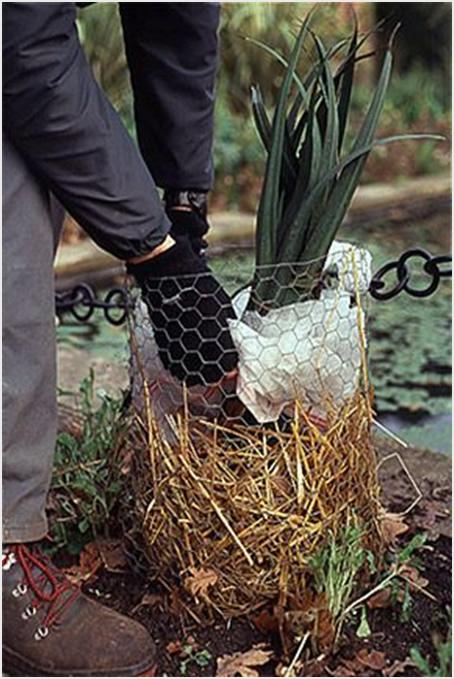 Kako sačuvati cvijeće tokom zime  Uredite Dom