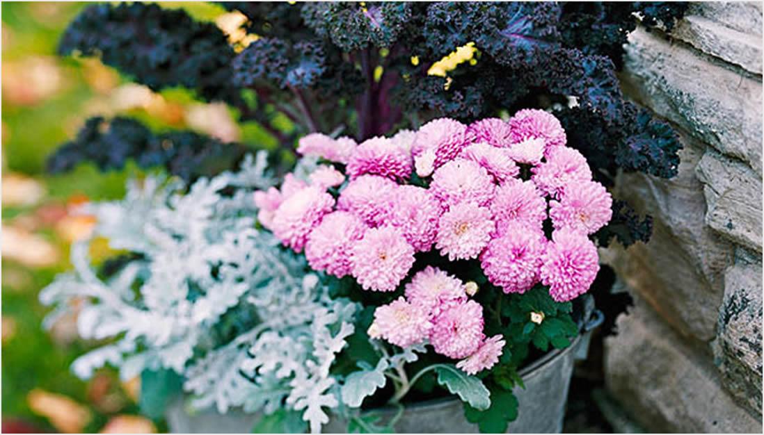 Jesenje saksije za vrt ili balkon  Uredite Dom
