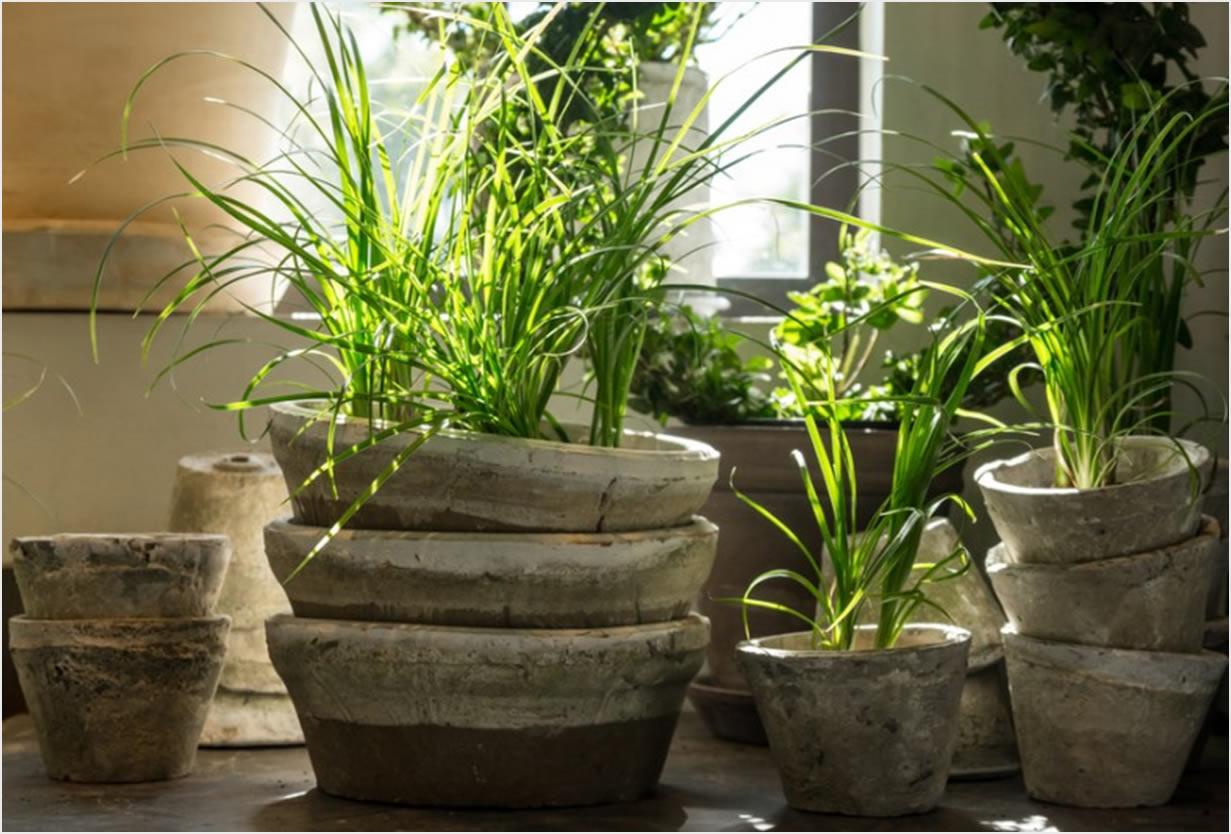 Biljke Za Tamne Prostore  Uredite Dom