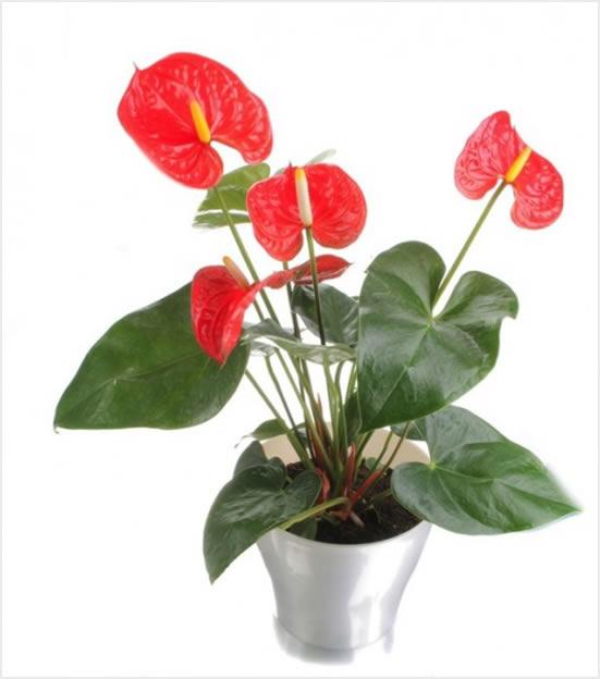 10 NAJBOLJIH: Ove sobne biljke ne traže svjetlost  Uredite Dom
