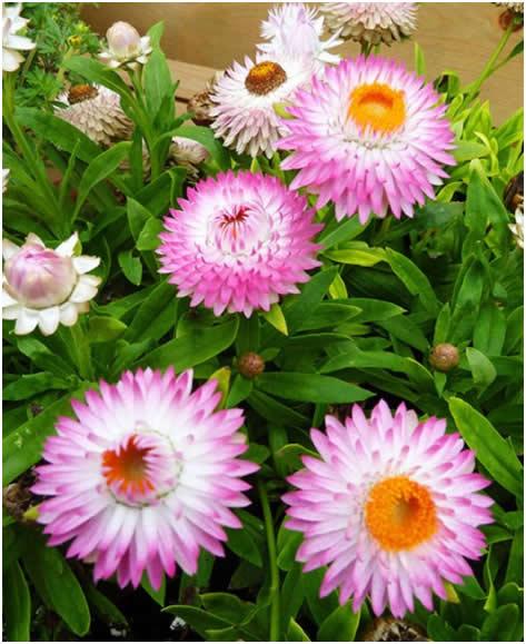 Pametna rješenja za vrtove u sušnim područjima  Uredite Dom