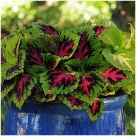 saksijske biljke1