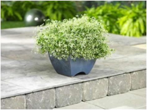 saksijske biljke4