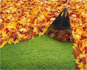 uredjenje dvorista na jesen