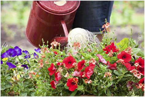Suša u vrtu i kako je pobijediti – drugi dio  Uredite Dom